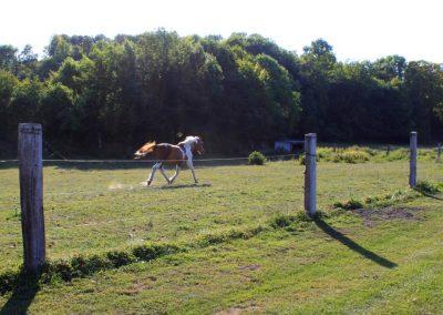relais-equestre (1)