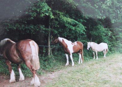 relais-equestre (4)