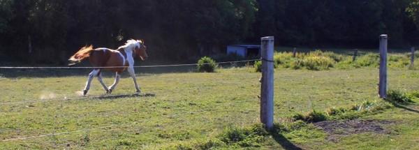 relais-equestre amiens